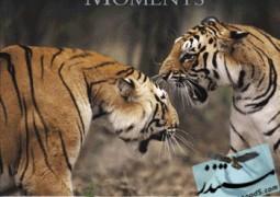بی نظیرترین صحنه های حیات وحش
