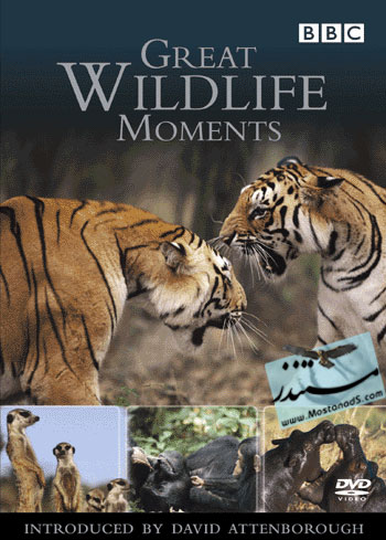 BBC Great Wildlife Moments