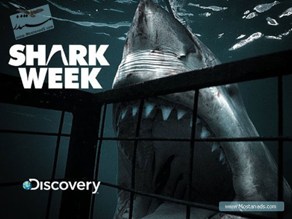 Shark Week - Shark City