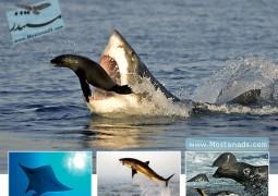 سیاره زمین : دریاهای کم عمق