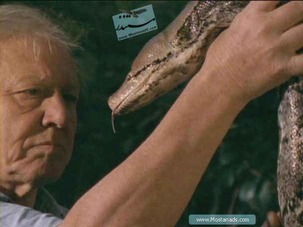 BBC - Wildlife Specials - Serpent 2002