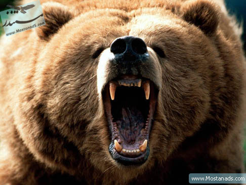 BBC - Wildlife Specials - Grizzly Bear 2001