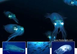 سیاره زمین : اعماق اقیانوس