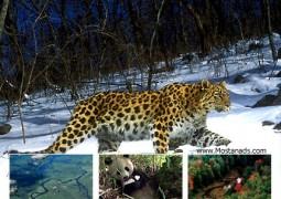 سیاره زمین : جنگل های فصلی