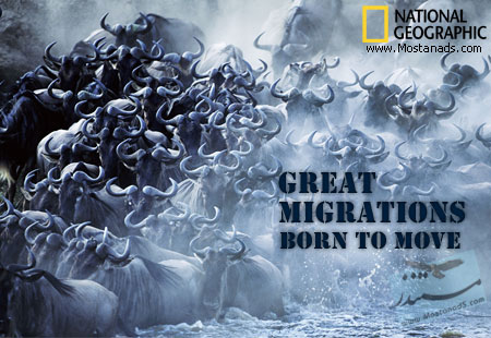 Great Migrations: Born To Move