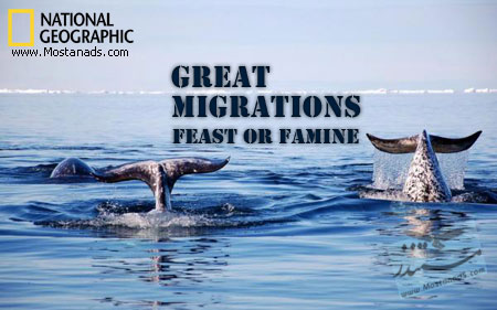 Great Migrations: Feast or Famine
