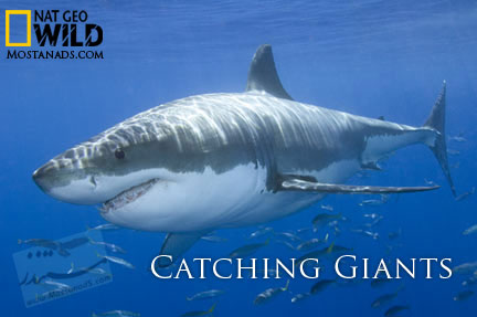 Nat Geo Wild - Catching Giants (2012)