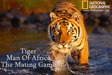 National Geographic - Tiger Man Of Africa The Mating Game (2012)