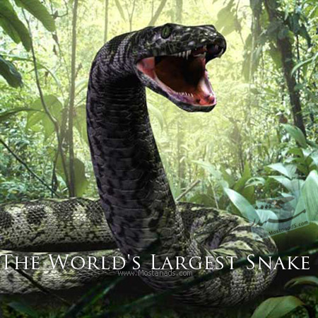 Channel 4 - The World's Largest Snake