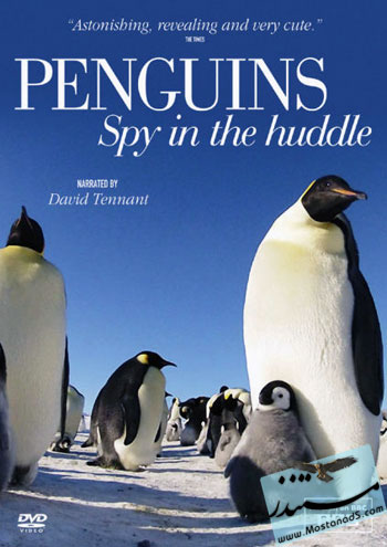 BBC-Penguins-Spy-in-the-Huddle-2013