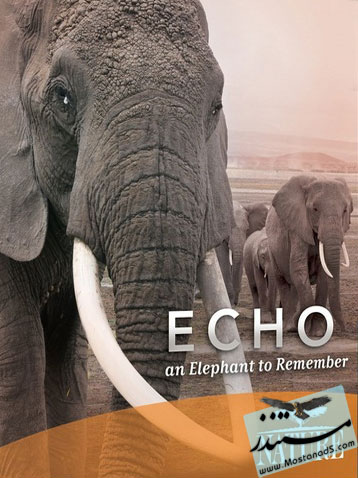 Echo An Elephant to Remember