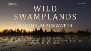 Beyond Blackwater