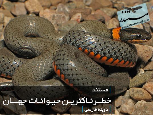 خطرناکترین حیوانات جهان (دوبله فارسی)