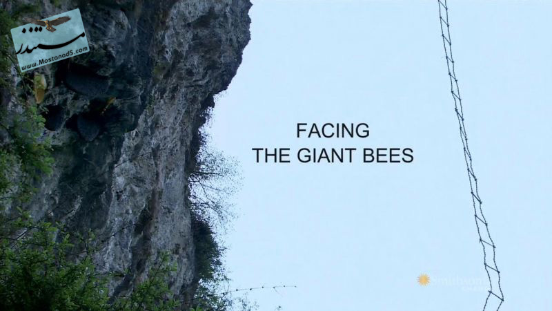 Facing.the.Giant.Bees