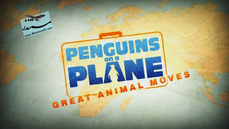 Penguins.on.a.Plane