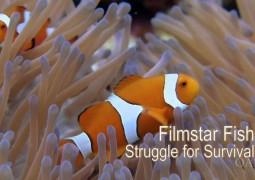 ماهی، ستاره فیلم: تلاش برای بقا (۲۰۱۱)