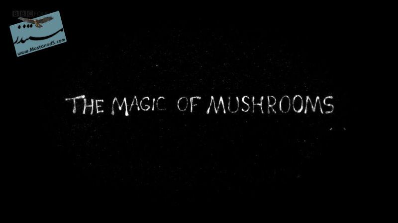 The_Magic_of_Mushrooms