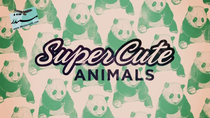 Super Cute Animals