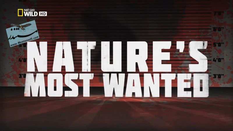Nature's Most Wanted