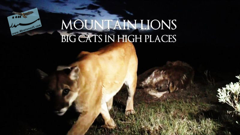 Big Cats in High Places