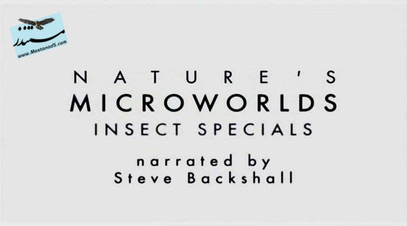 Insect Specials