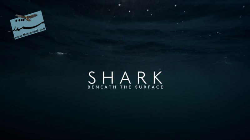 Shark  Beneath the Surface