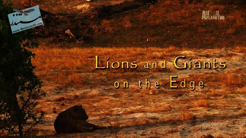 Lions and Giants