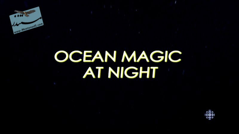 Ocean Magic at Night