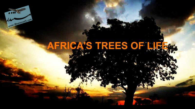 Africa's Trees of Life