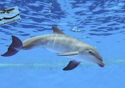 یک جاسوس در گروه دلفین ها (دوبله فارسی)