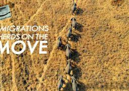 مهاجرت ها: گله های در حال حرکت(۲۰۲۰)