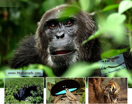 BBC Planet Earth - Jungles