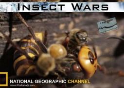 جنگ حشرات