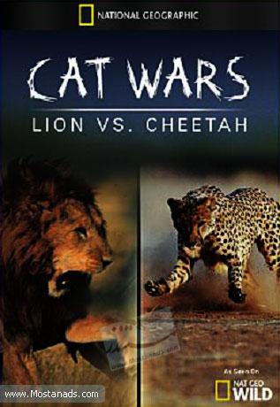 Cats Wars: Lion vs. Cheetah