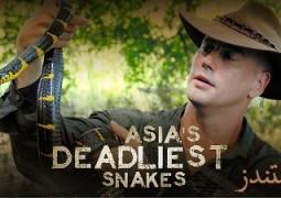 دانلود مستند مرگبارترین مارهای آسیایی