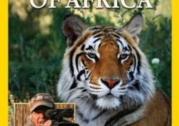 مستند مرد ببر در افریقا: بازی جفت گیری