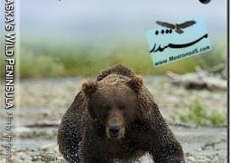 پارک ملی کاتمای: طبیعت وحشی آلاسکا