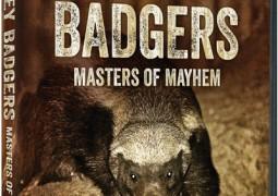 مستند Honey Badgers: Masters of Mayhem
