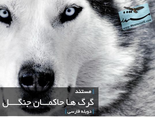 گرگ ها حاکمان جنگل