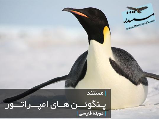 پنگوئن امپراطور