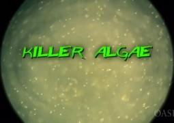 جلبک قاتل (۲۰۰۹)