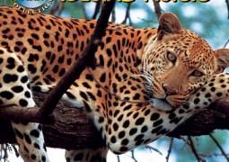حیات وحش آسیا: جادوی جزیره (۲۰۰۹)