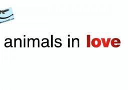 حیوانات عاشق (۲۰۱۵)