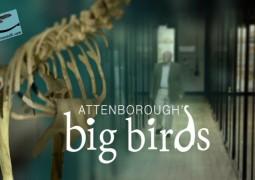 پرندگان بزرگ اتنبرو (۲۰۱۵)