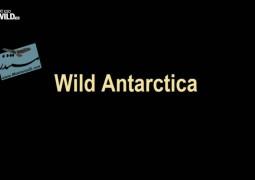 حیات وحش قطب جنوب (۲۰۱۵)