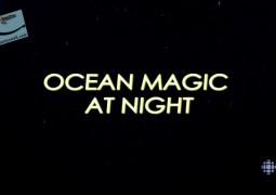 جادوی اقیانوس در شب (۲۰۱۶)