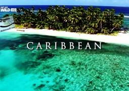 حیات وحش جزایر: کارائیب (۲۰۱۵)