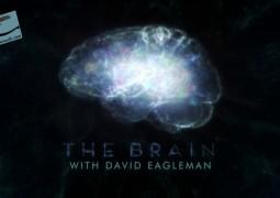 مغز با دیوید ایگلمن (۲۰۱۵)