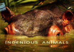 جانوران باهوش: سری اول (۲۰۱۶)