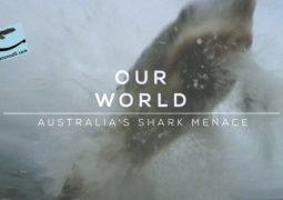 خطر کوسه های استرالیا (۲۰۱۶)